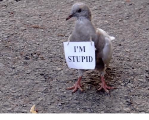 im-stupid-40218973